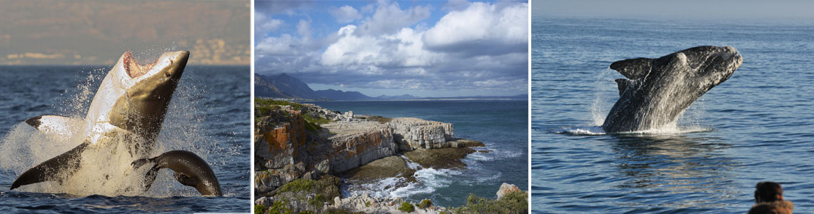 cape town package tour hermanus 2