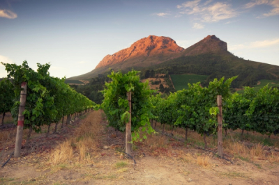 Stellenbosch Winelands Tour