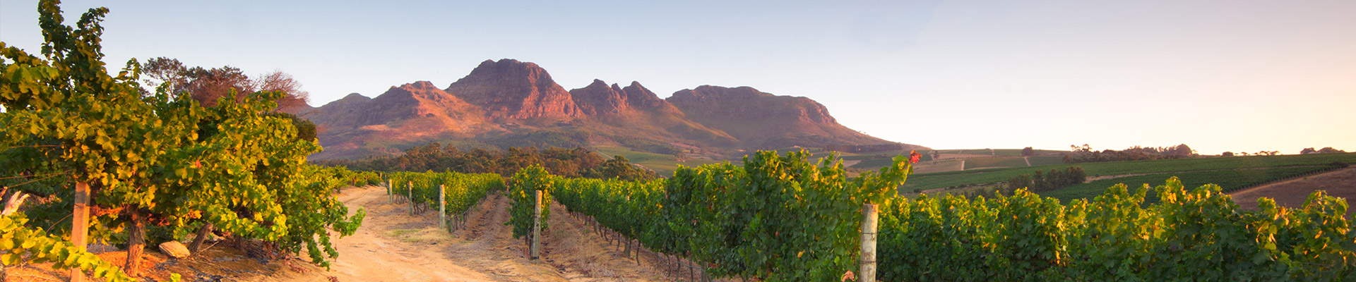 Helderberg mountain behind vineyards